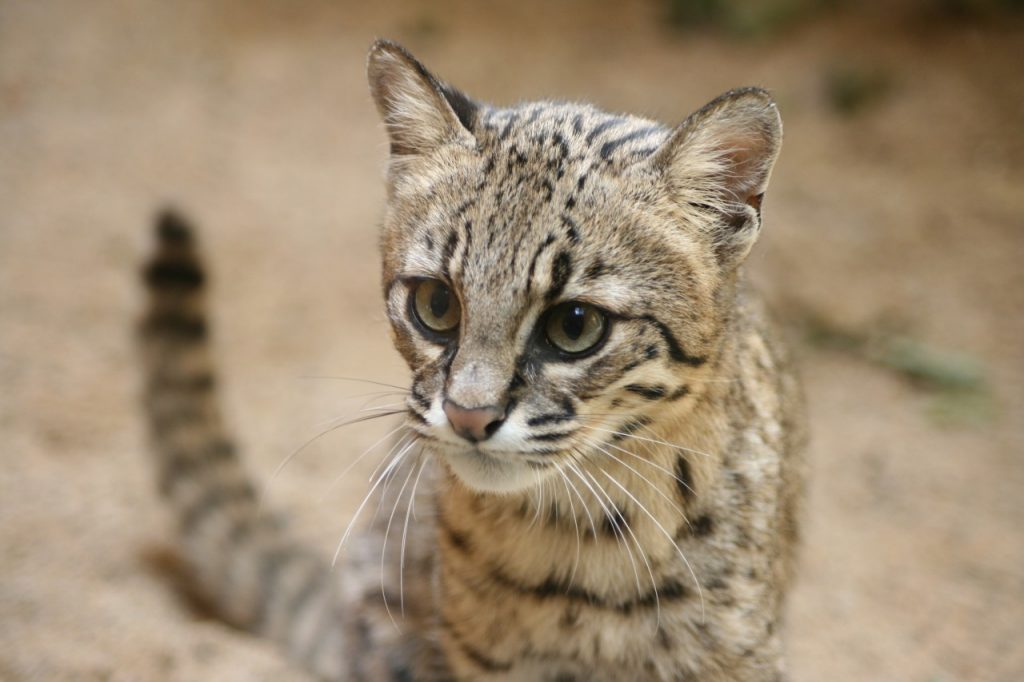 Wild cat photographed with Canon Eos 400D