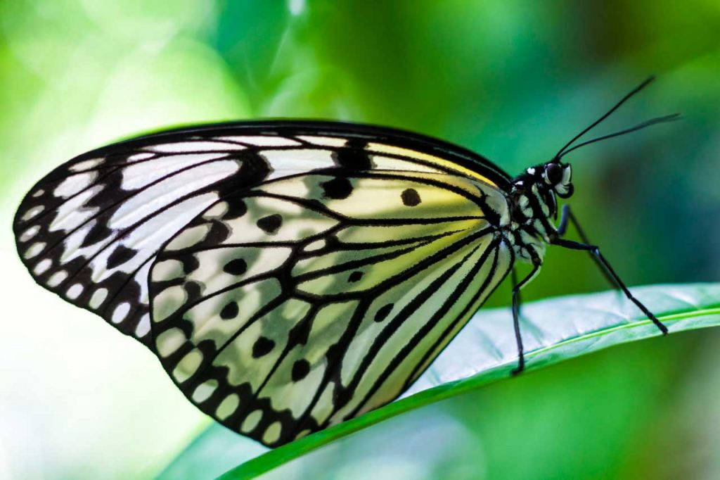 Butterfly photographed with Canon 5D Mark II