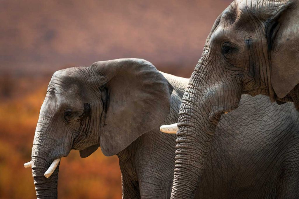 Elephants photographed with Canon Eos 70D.